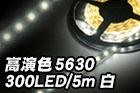 高演色5630 300LED/5m 白